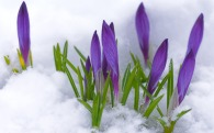early-spring-clipart-19